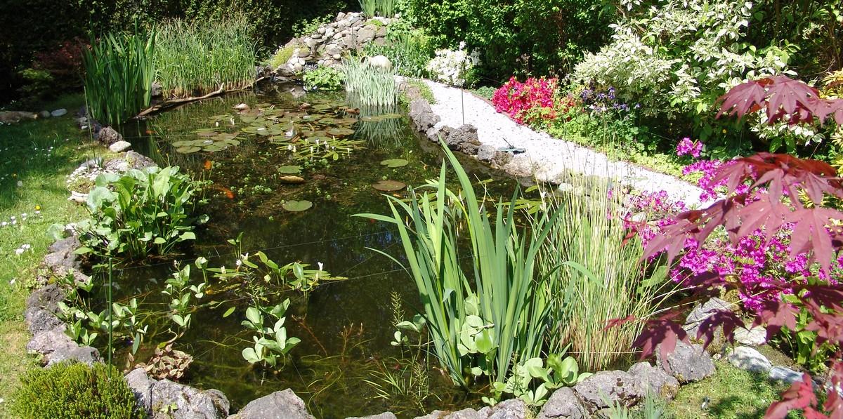 Installer un bassin de jardin préformé - WEBTV Aquajardin - Grabeezy